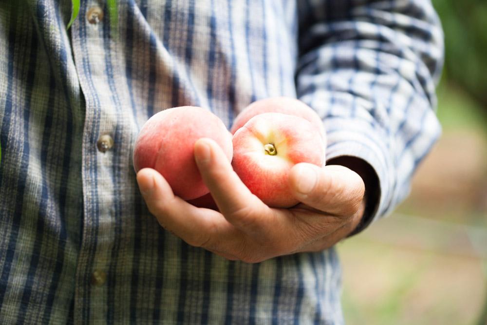 cagette de peche pendant la récolte
